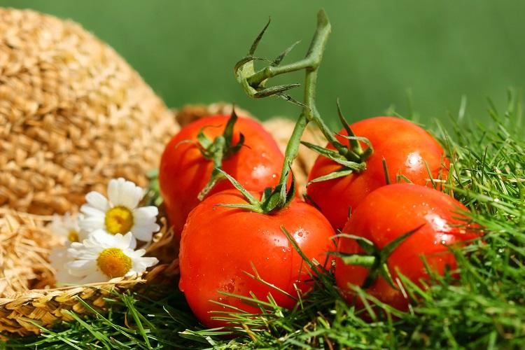 토마토, 과일로 깜빡 속았네
