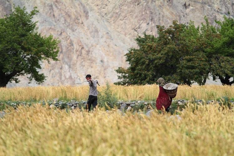 파키스탄으로 총총 떠나는 이유